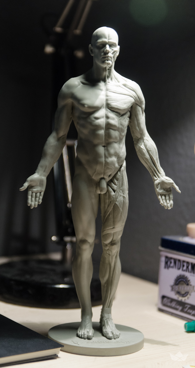 Review Of The Male Anatomical Figure From 3d Total